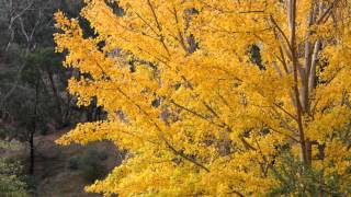 Reason Piano - Ost. Autumn in my heart
