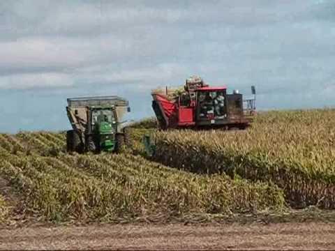 Seed Corn Picking 2009