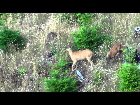 Deer promo