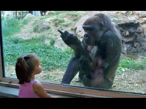 Kids At The Zoo New Compilation 2016 Funny Babies At The Zoo