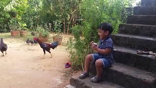 Feeding Country Chicken