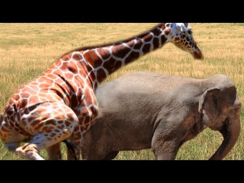 Animal Mating Breeding : Different Animals