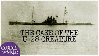The Case of the U-28 Creature