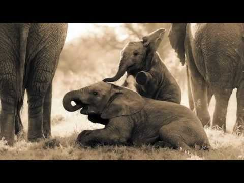 Gorah Elephant Camp, Addo Elephant National Park, Eastern Cape, South Africa