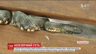 Велика змія в одному з парків Хмельницького наполохала місцевих жителів