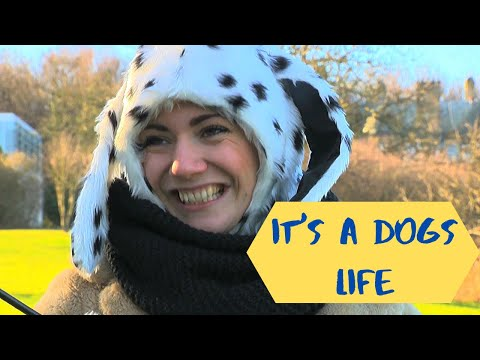 It's a Dogs Life TV Comedy Pilot - Visual Anarchy Production