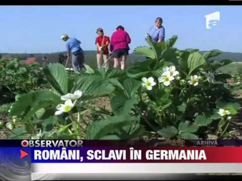 Romani sclavi in Germania 2012