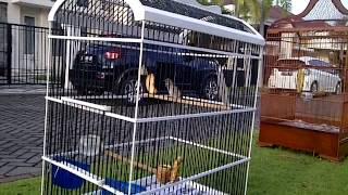 Blackthroat Import Ngerol Alasan...^^ Download Mp3 Mp4 3GP HD Video
