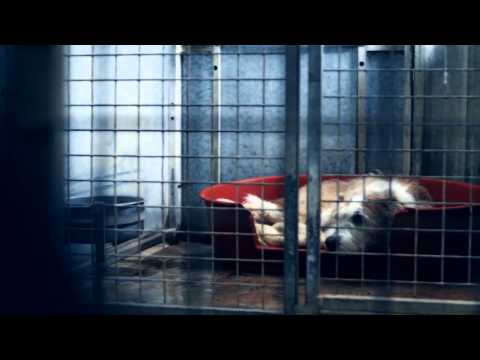 Xxx Mp4 They Need Your Help Kennel Dogs Xxx 3gp Sex