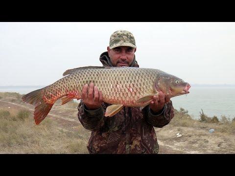 рибалка на карпа 2015 видео