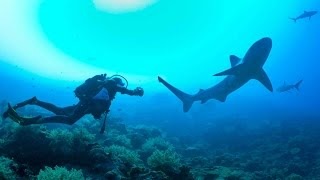 Scuba Diving with SHARKS!! Bassas Da India - Sailing SV Delos Ep. 100