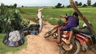 Terrifying!! Two Brother Catch Big Snake on The Road While Riding Motor Along The Road-Snake Attack