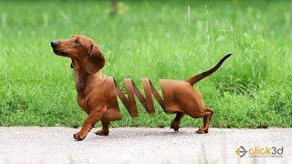 Dog Manipulation | Photoshop Tutorial | click3d