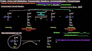 Protein / Amino Acid Metabolism (Part 3 of 8) - Transamination Reactions and Aminotransferases