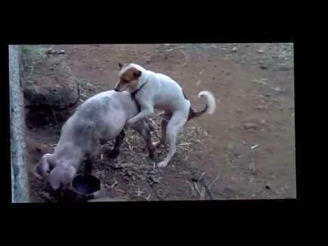 Video gazmore derri vs qeni