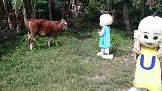 Badut Upin & Ipin GEMBALA SAPI Lagu Anak-anak