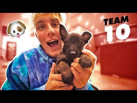 I ACTUALLY BOUGHT A PUPPY not clickbait