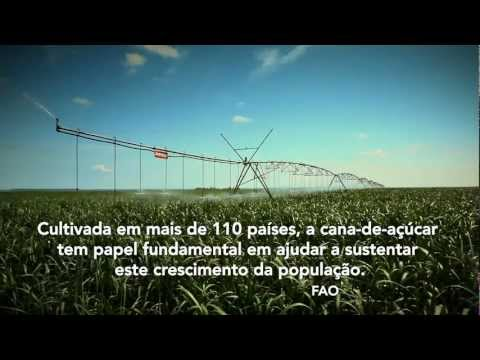 Pivot Irrigation for Sugarcane - Portugese