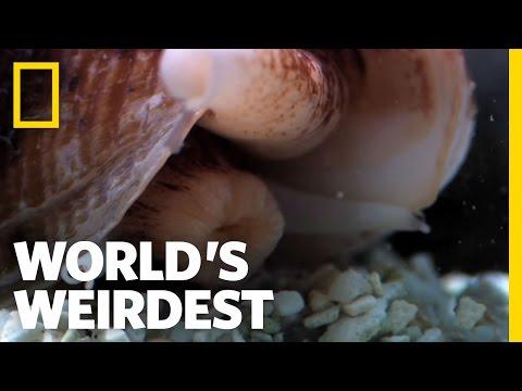 Xxx Mp4 Killer Cone Snail World S Weirdest 3gp Sex