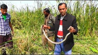 পটুয়াখালী রাজ্জাক বিশ্বাস এর বিভিন্ন জায়গায় বিষধর সাপ ধরার লাইভ ভিডিও পর্ব-২ | BD Snake Channel |HD