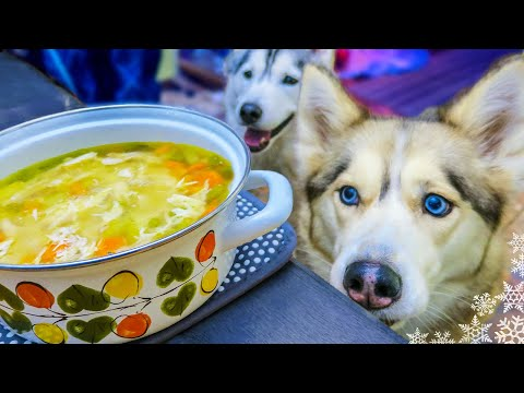 CHICKEN SOUP FOR DOGS DIY How to make Chicken Soup for Dogs Snow Dogs Snacks 43