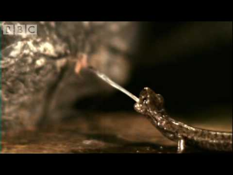 Fastest animals on Earth in slow motion Animal Camera BBC