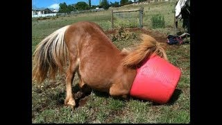 How to make healthy meal for horses