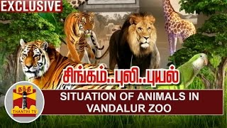 EXCLUSIVE | Situation of Animals in Vandalur Zoo | Cyclone Vardah | Thanthi TV
