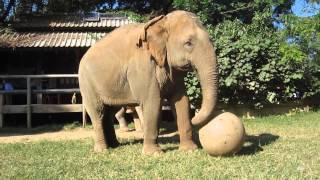 Lucky,  Mae Boon Ma & Mae Bua Loy - Elephant Nature Park - Chiang Mai Thailande
