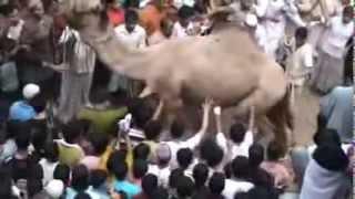 Awrkan Iyo Dadkan Raba Inay Qashaan Maxaa kalahaysata (Batalaale.net)