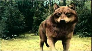 Twilight Saga: Eclipse Battle Vampires & Wolf Pack Fighting Scene