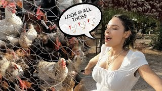 DESI FOUND HER CHICKENS IN MEXICO | THE PERKINS