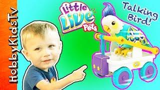 Talking Bird Toy! Little Live Pets Rolls Off Table + Funny Phrases HobbyKidsTV