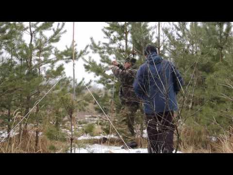 ловля овсянок ремезов