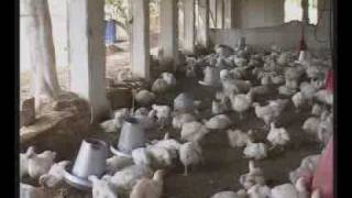 Broiler Farming Documentary Part -1 Dr.Ashraf Sahibzada