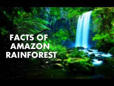 Xxx Mp4 MINDBLOWING FACTS OF AMAZON RAINFOREST 3gp Sex