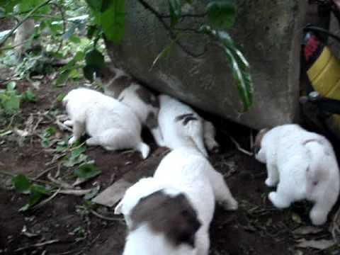 犬のいる庭