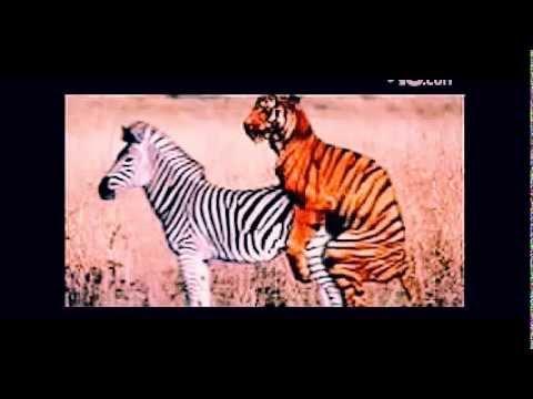 animal sex videos   funny sex video   crazy videos