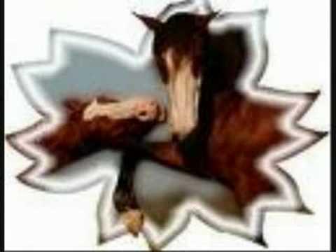 Xxx Mp4 Vidéo Sur Les Chevaux Xxx 3gp Sex
