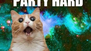 CAT PARTY I Song ♫♫♫