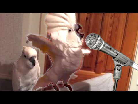 19 Funny Bird Videos Awesome Compilation