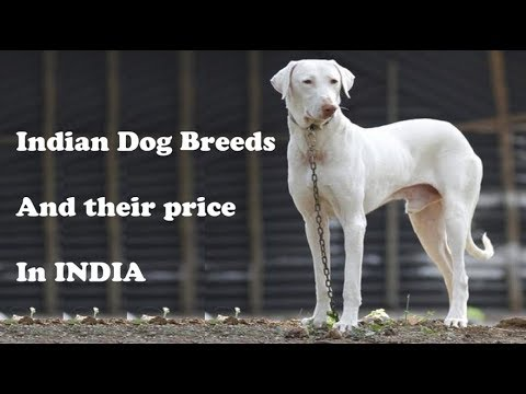 Top 10 Indian Dog breeds and their price in India