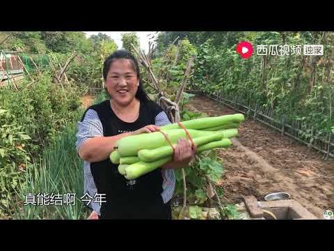 农村源子:老爹想吃饺子了,源子一高兴面和多了,1个小时包了2大盖帘饺子