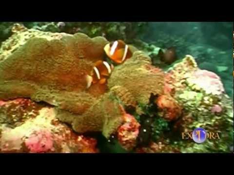 La Abundancia de Vida en el Arrecife de Coral