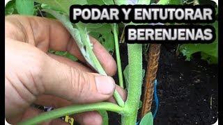 Como Podar Y Entutorar Las Berenjenas || Cultivo Berenjenas || La Huertina De Toni