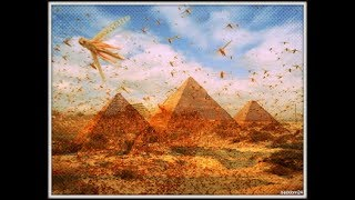 Plagues of Egypt are Here