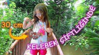 KELEBEK ÇİFTLİĞİNDE KELEBEK SEVGİSİ & 30 cm DEV KELEBEK (Kelebeklerin ömrü 3 gün mü?)