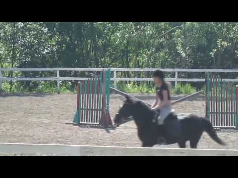 Xxx Mp4 A Girl And A Horse How To Teach Your Horse To 3gp Sex