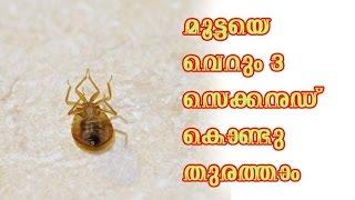 മൂട്ടയെ വെറും 3 സെക്കൻഡ് കൊണ്ടു തുരത്താം/Malayalam Health Tips