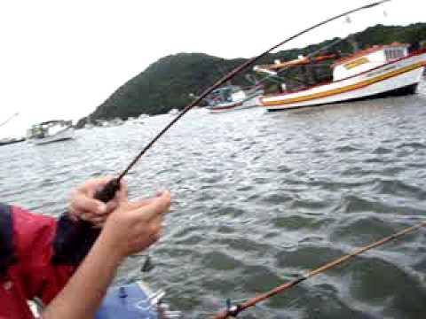 Corvina 2 500 kg com equipamento leve canal de bertioga Equipe Maicon Pesca Esportiva